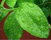 Plant Based Cleaner